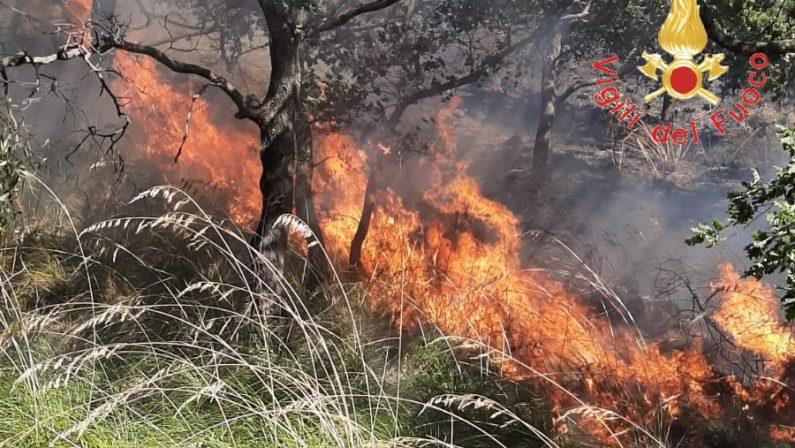 Incendio minaccia resort e abitazioni a CatanzaroFiamme domate dopo alcune ore, diversi ettari in fumo