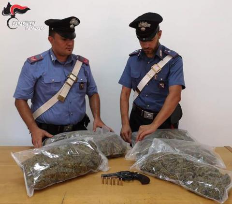 curinga marijuana