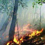 incendi boschivi.jpg