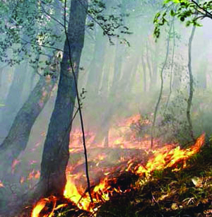 Incendi bischivi, in Irpinia nove roghi in quarantotto ore