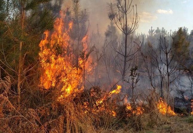 Ambiente, i padri francescani lanciano l'allarme dopo gli incendi: «Umanità in pericolo»