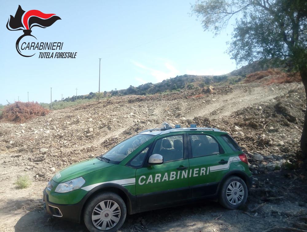 Ambiente, estirpati ettari di macchia mediterraneaDanni all'intera area, due denunce nel Cosentino