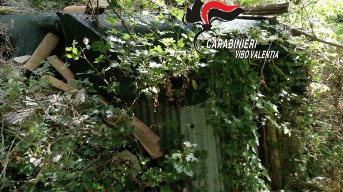 Decine di piantagioni di canapa scoperte nelle SerreOltre 2.200 piante nel Vibonese: valore 8 milioni