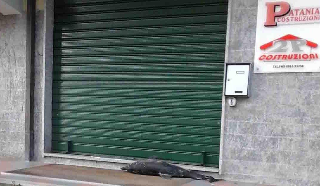 Il delfino morto lasciato davanti l'azienda di Patania