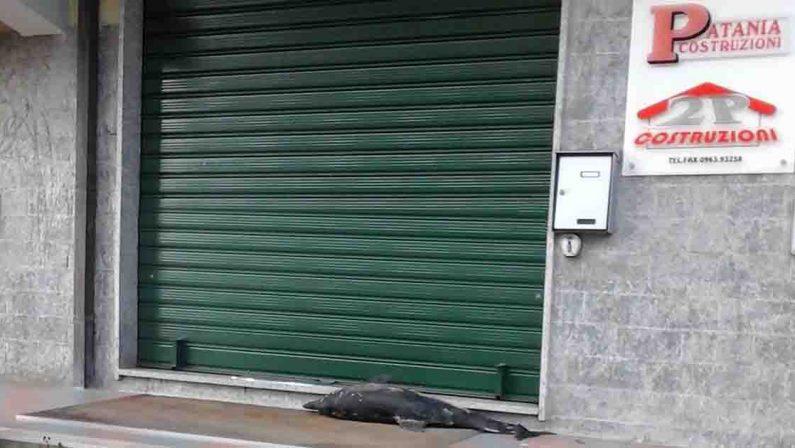 Rinascita Scott, il delfino morto per l'intimidazione a Francesco Patania
