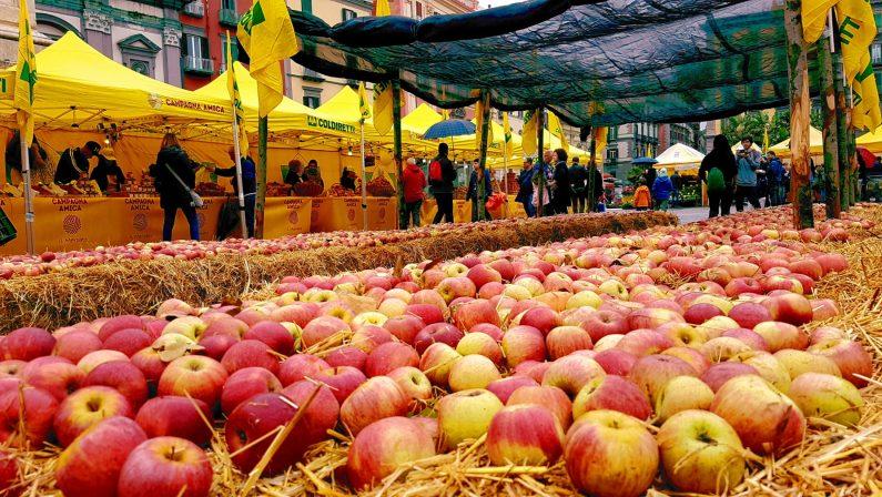 Annurca Fest: Coldiretti, la regina della mele nel cuore di Napoli