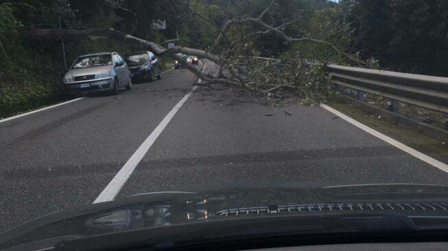 Albero cade sulla statale 18, paura per gli automobilisti nel Vibonese