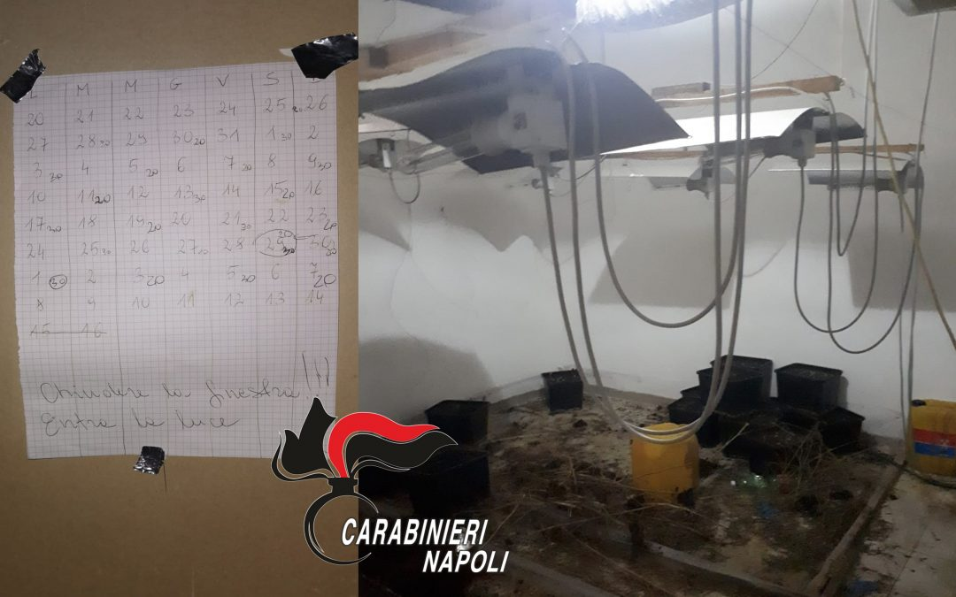 Coltiva marijuana in casa. 37enne arrestato dai carabinieri