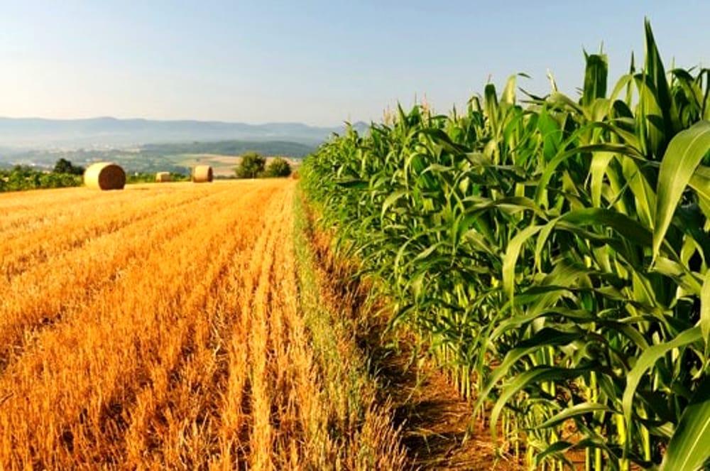 Manovra 2020, tra i provvedimenti l'esenzione Irpef e il credito d'imposta in Industria 4.0,ma per l'Agricoltura del Sud bottino esiguo