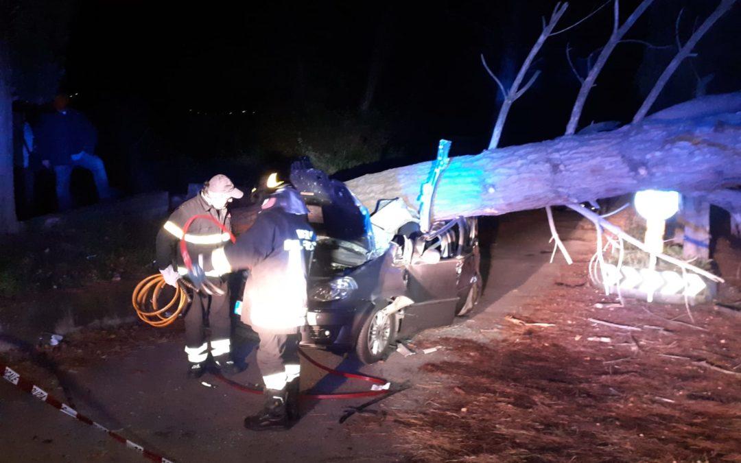 L'albero caduto sull'automobile