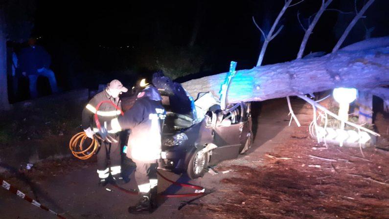 Crolla un albero sull'auto, ferite e ricoverate le due persone all'interno