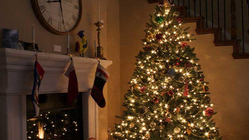 Per il Natale in tanti scelgono ancora l'albero vero: la spesa media è di 42 euro