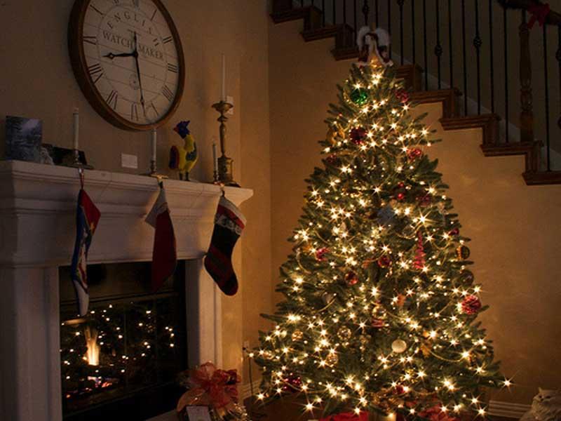 Albero Di Natale Tumblr.Per Il Natale In Tanti Scelgono Ancora L Albero Vero La Spesa Media E Di 42 Euro Il Quotidiano Del Sud