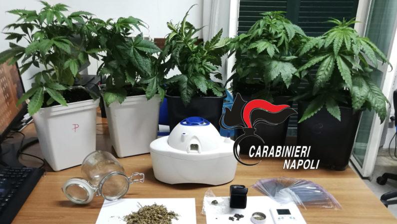 Una piccola serra artigianale in casa per coltivare marijuana, 35enne arrestato