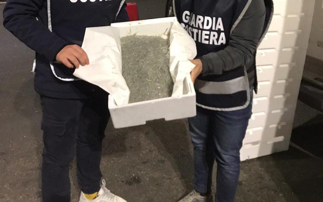 Maxi sequestro di novellame sarda al porto di Villa San Giovanni: il carico donato in beneficenza