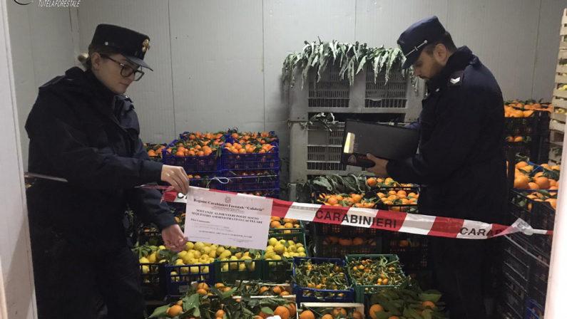Agricoltura, sequestrate diverse tonnellate di agrumi, ortaggi e olio nel Cosentino