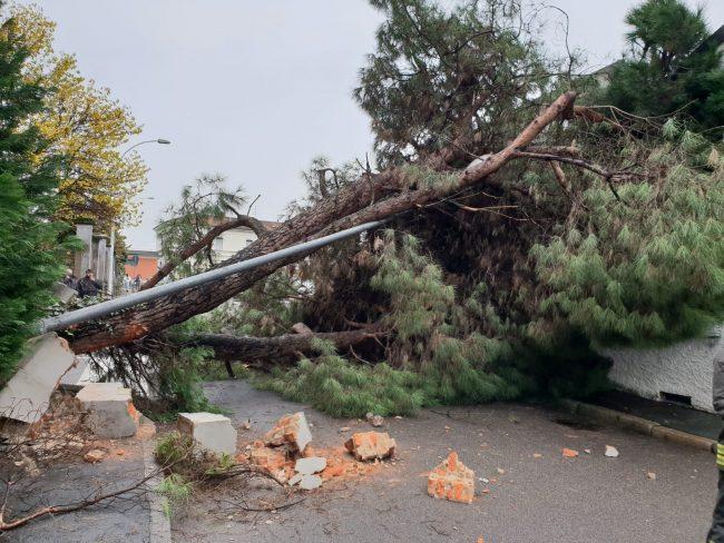Maltempo, cade un albero perde la vita un medico salernitano