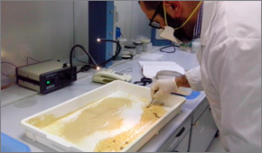 La farina d'insetti (creata in Basilicata) che rivoluzionerà il futuro della cucina