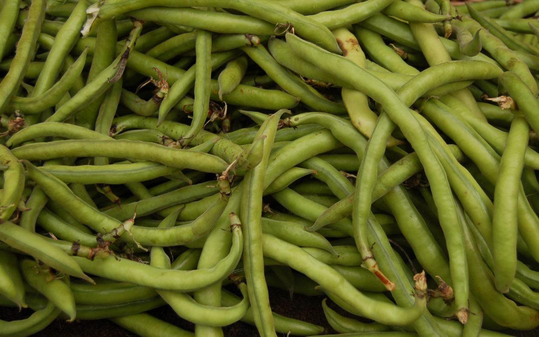 Potenza: via le fave dagli scaffali, il Comune bandisce i legumi