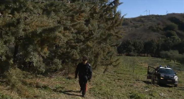 Giallo nel Potentino: ritrovato un cranio in un uliveto, indagano i carabinieri