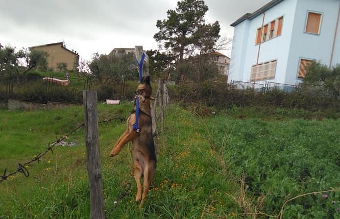 Un cane impiccato a un palo nel Cosentino L'associazione animalista: «Gesto criminale»