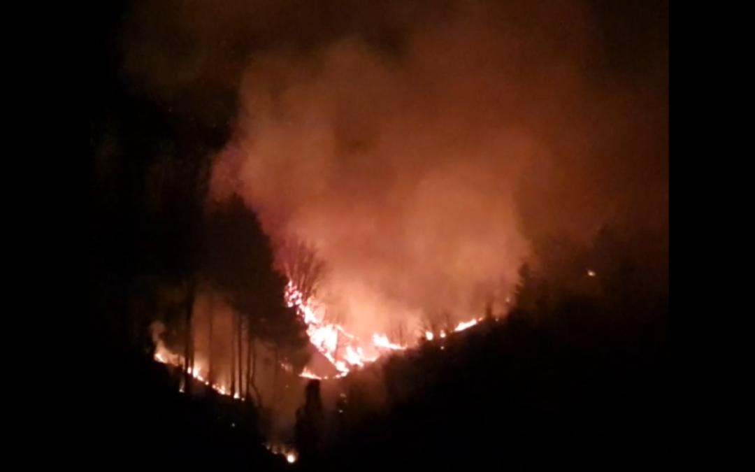 VIDEO – Vasto incendio nella Presila Catanzarese, in corso l'intervento dei vigili del fuoco
