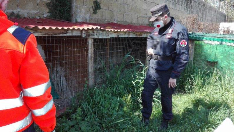Pozzuoli: maltrattamento di animali, 39enne nei guai