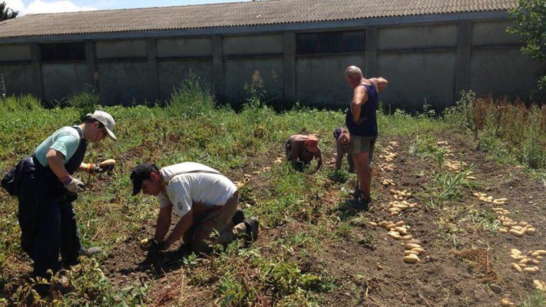 Disabili coltivano la terra e consegnano prodotti alle famiglie bisognose: l'iniziativa solidale del Catanzarese