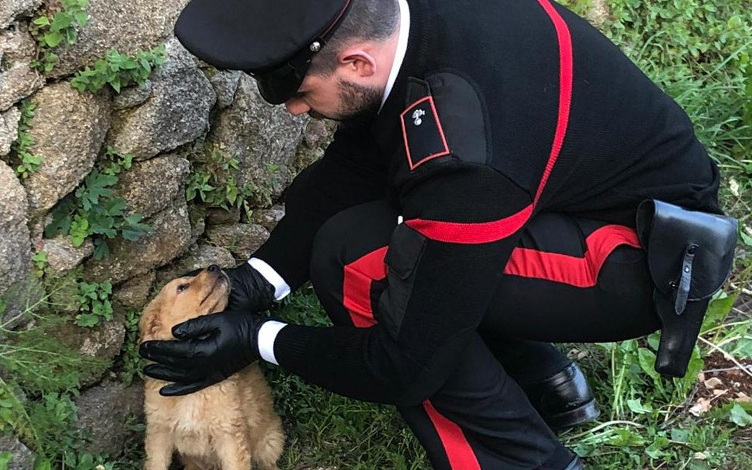Cuccioli abbandonati tra i rifiuti ad Acquaro, salvati dai carabinieri che ne adottano uno