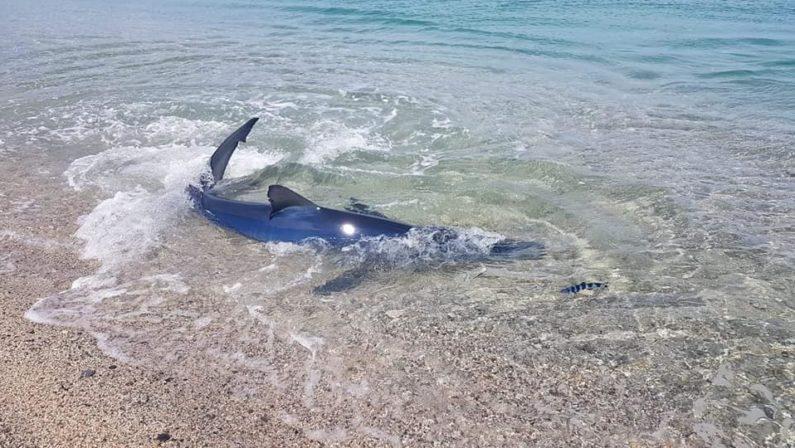 LA FOTONOTIZIA - Lo squalo a riva nel mare cristallino di Soverato