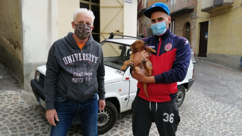 Cani salvati ad Acquaro, sono stati tutti adottati dopo essere stati salvati