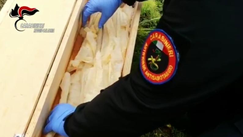 'Ndrangheta: sequestratearmi e gelatina esplosiva nel Reggino. Intervento degli artificieri - VIDEO
