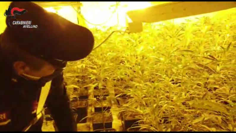 "Atripalda, filiera ""Indoor"" per la produzione di marijuana, arrestato un cinese"
