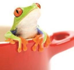 Mimì - Il principio della rana bollita