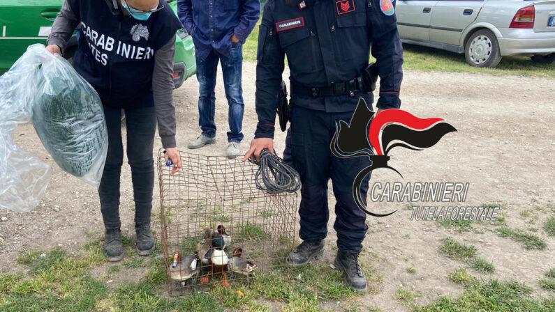 Reggio Calabria, un uomo arrestato e due denunciati per bracconaggio