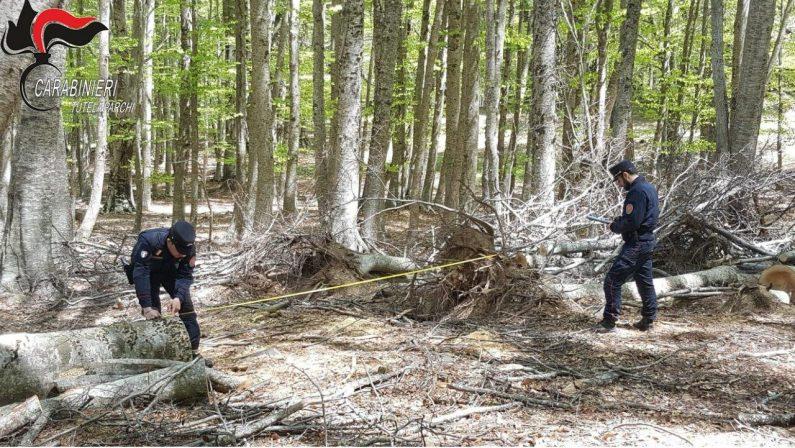 Oltre 40 quintali di legna trafugati da un bosco nel Crotonese