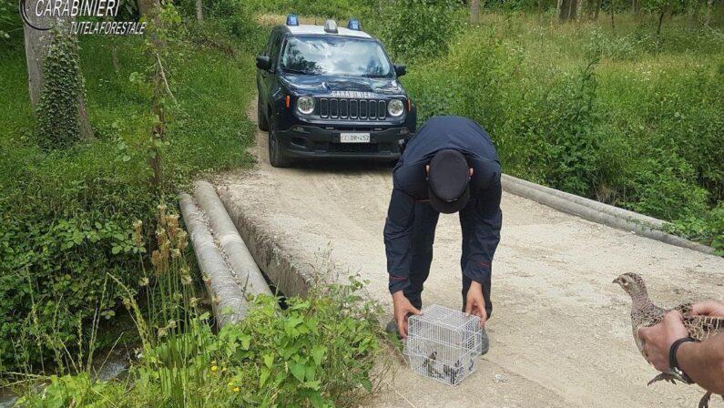 Uccelli di specie protetta chiusi in gabbia, denunciato un uomo nel Cosentino