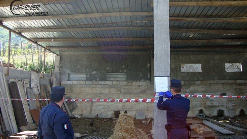 Due sequestri di manufatti edilizi operati dai carabinieri forestale in provincia di Cosenza