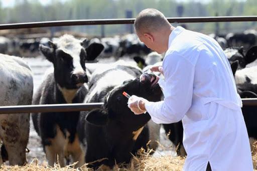 Gravi irregolarità nel concorso ASL Caserta per dirigenti veterinari