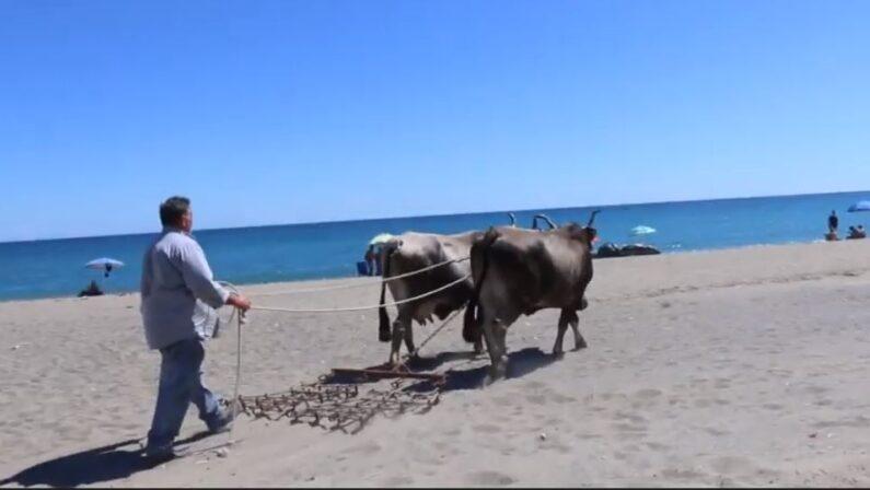Spiagge Mandatoriccio, il comune: «Sono aree protette, non possono essere pulite con mezzi meccanici»