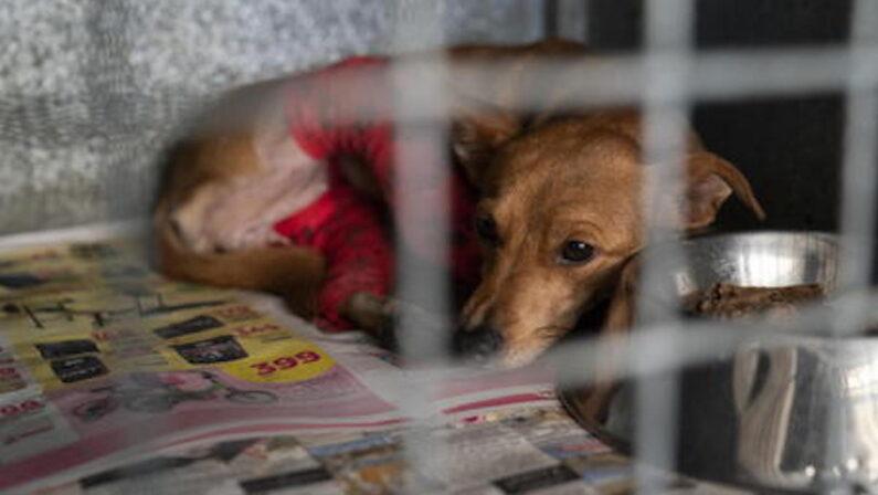 Catanzaro: 66 cani in locali fatiscenti, una denuncia per maltrattamenti
