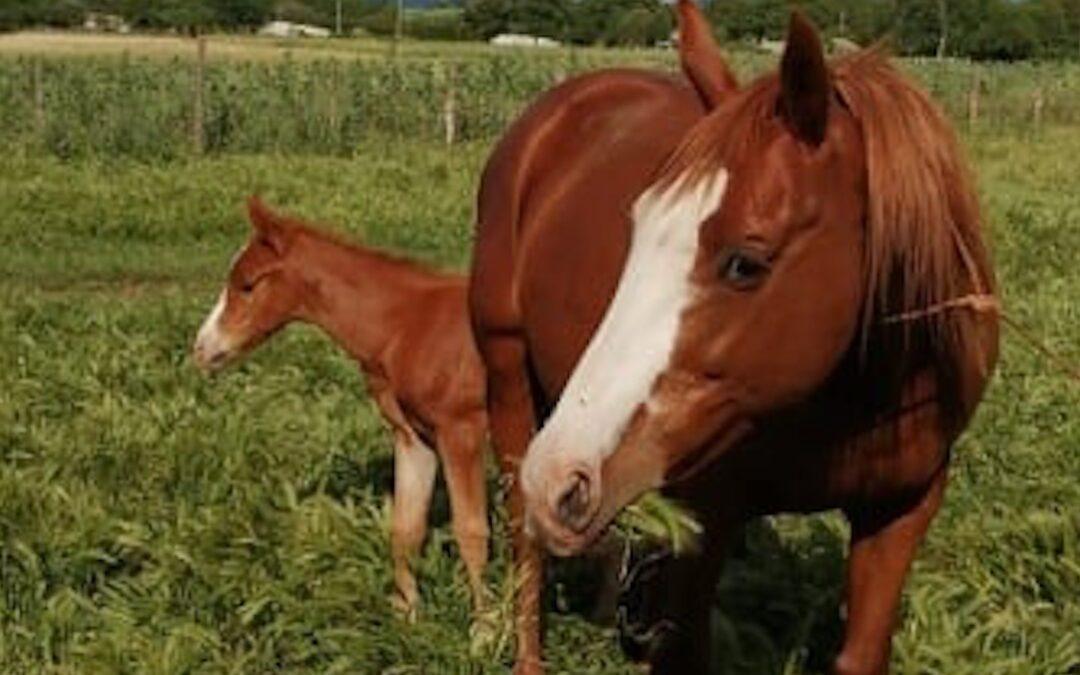 I cavalli rubati a Zungri