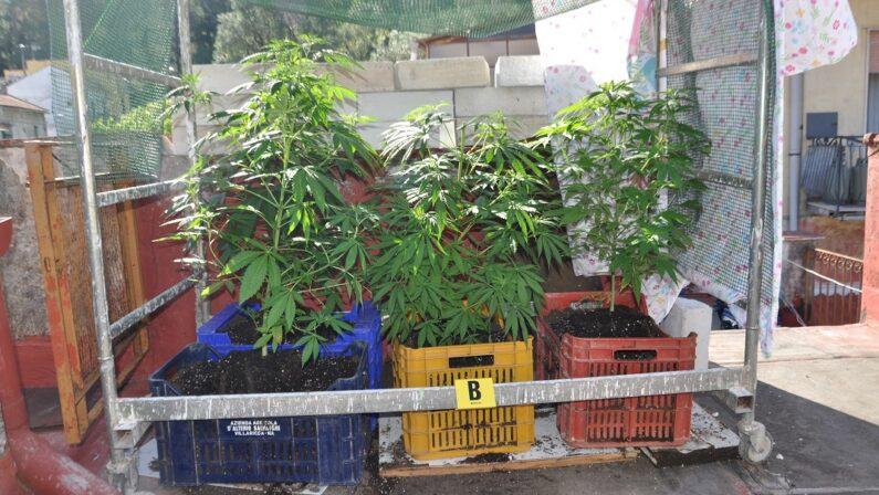 Cava de' Tirreni, coltivava droga nel sottotetto: arrestato