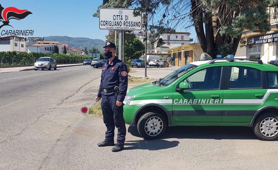 Abusivismo e denunce a Corigliano Rossano, sequestri e denunce dei carabinieri