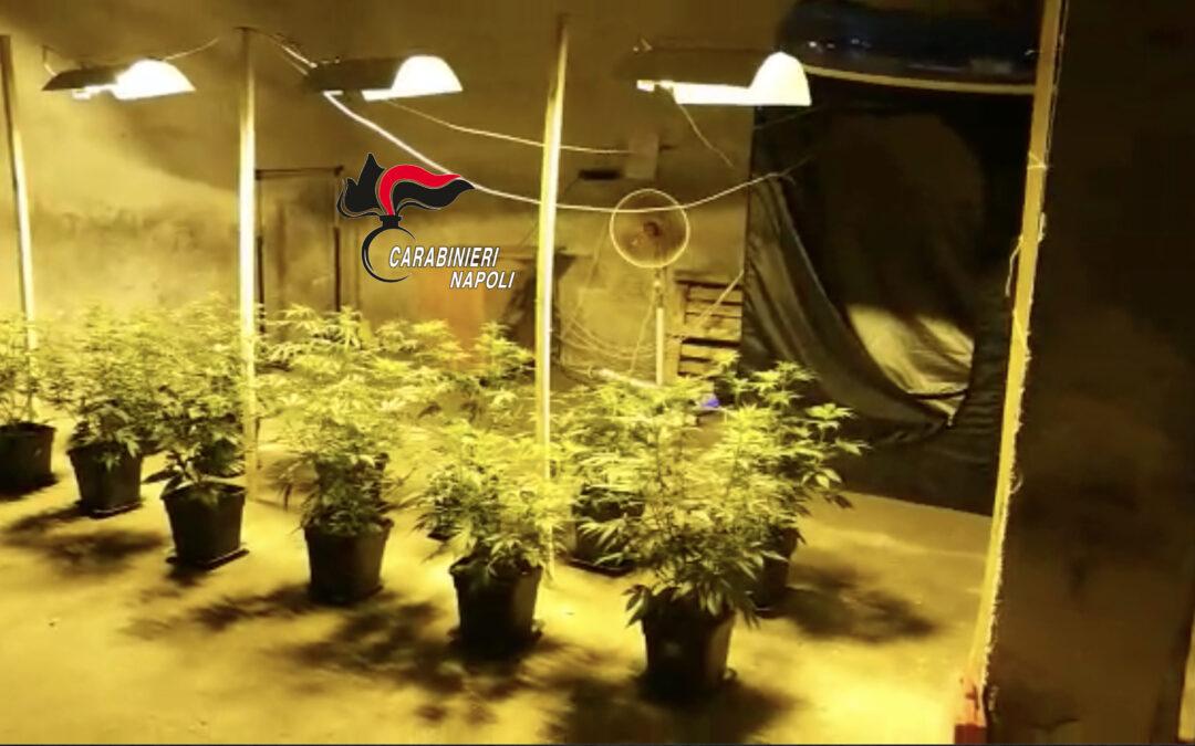 Casoria: Pusher con il pollice verde. Carabinieri trovano una serra ed arrestano 33enne