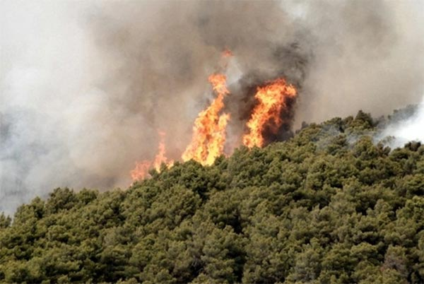 Incendi, giornata nera, decine di ettari in fiamme in Irpinia
