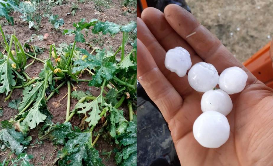 Maltempo: Coldiretti, grandinata distrugge campi tra Irpinia e Sannio