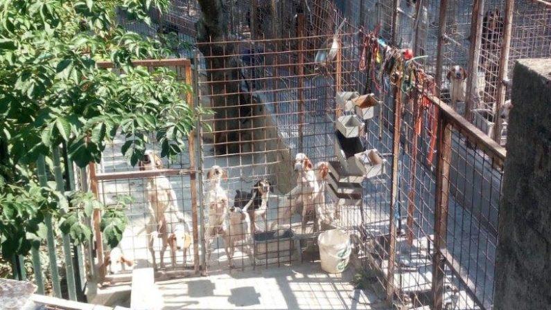 Violazioni e smaltimento illecito, sequestrato canile nel Cosentino: due denunce