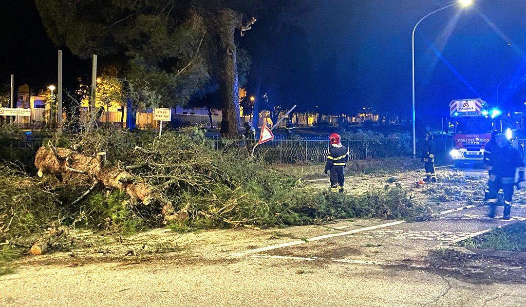 L'albero caduto sulla strada