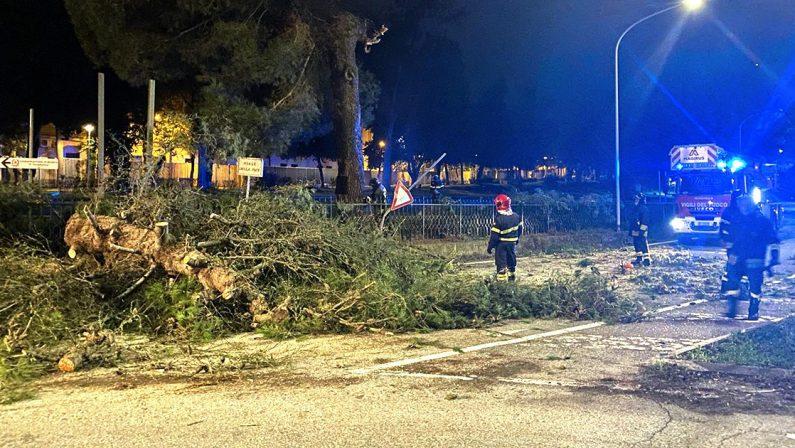 Vibo Valentia, tragedia sfiorata in città: grande albero cade abbattendosi in mezzo alla strada